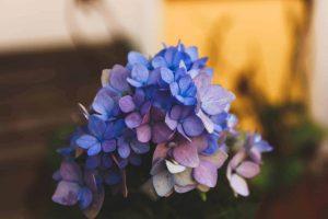 Read more about the article Scenariile de viata se vindeca relational