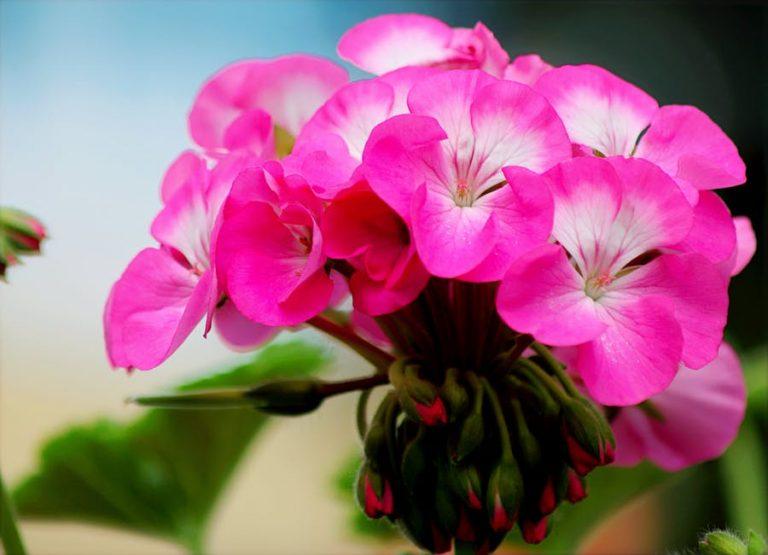 Compasiune, Speranta si Iertare in Psihoterapie